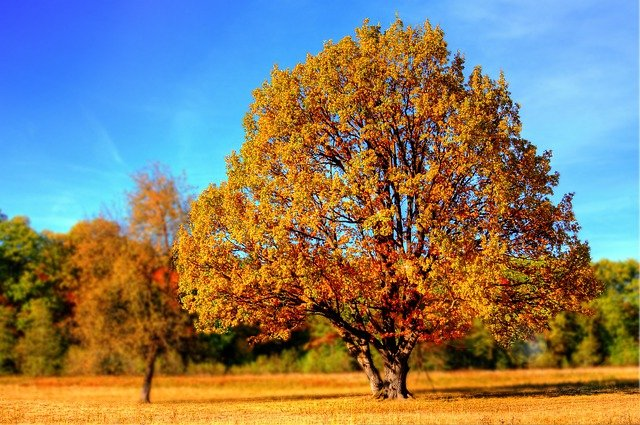 Tree, Fall, Fall Colors, Fall Leaves, Autumn