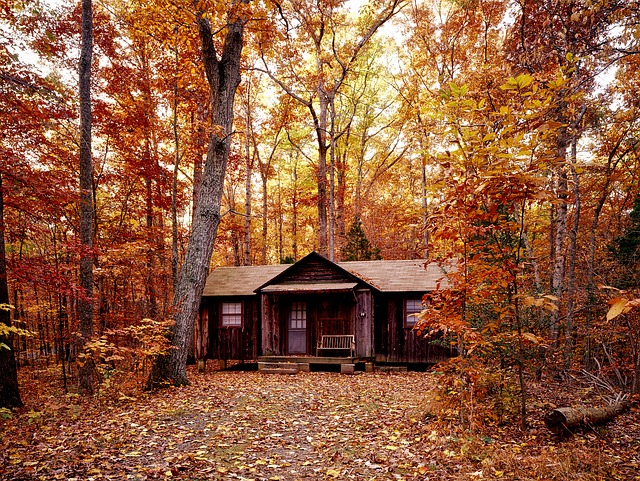 Autumn, Fall, Foliage, Forest, Trees, Woods, Log Cabin