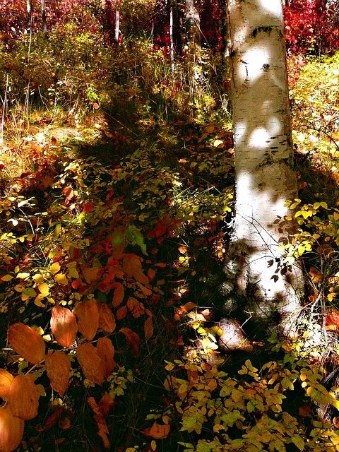 Indian Summer, Fall, Tree, Organic, Agriculture