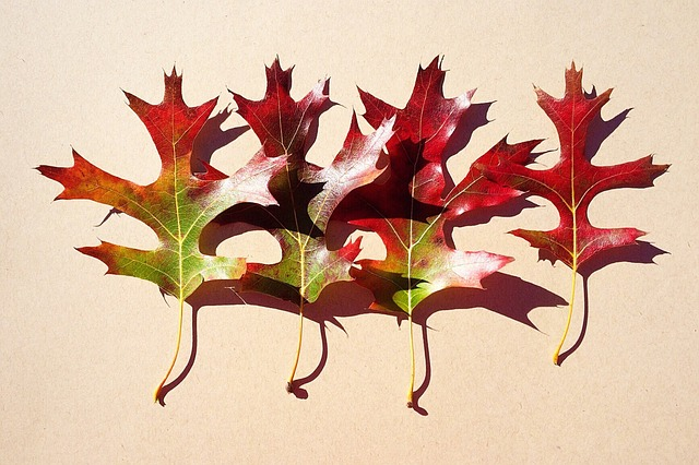 Leaves, Fall, Autumn, Season