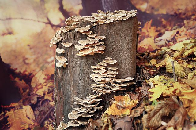 Fall, Nature, Wood, Tree, Leaf, Wooden, Forest, Fungi
