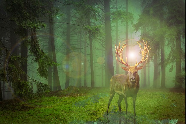 Hirsch, Forest, Crown, Fallow Deer, Wild, Nature