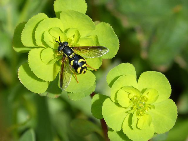 Hoverfly, False Bee, Nature, Flower, Plant, Leaf