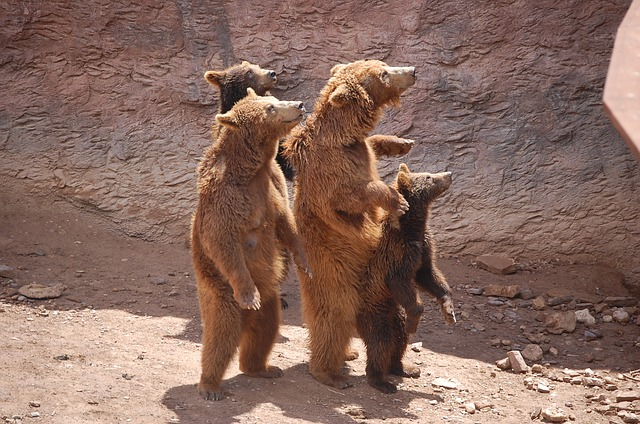 Nature, Zoo, Brown Bear, Show, Animal, Family