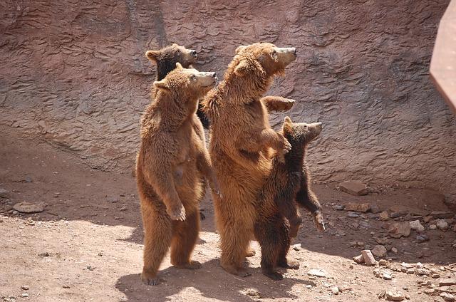 Nature, Zoo, Brown Bear, Show, Animal, Family