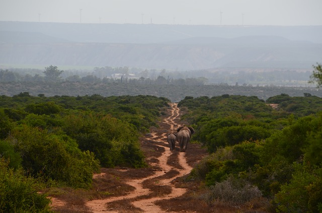 Africa, Elephant, Family, Wildlife Photography