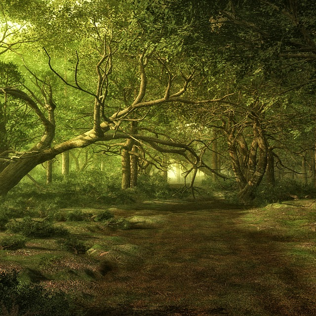 Forest, Trees, Landscape, Fairy Tale Forest, Fantasy