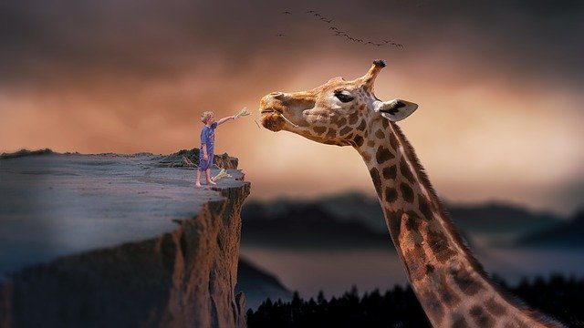 Giraffe, Child, Nature, Dream, Fantasy, Feeding, Boy
