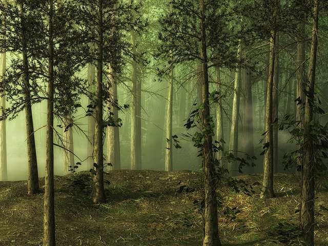 Forest, Tree, Landscape, Fairy Tale Forest, Fantasy