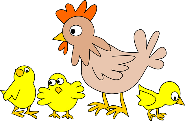 Poultry, Chicken, Animal, Bird, Farm, Hen, Farm Animals
