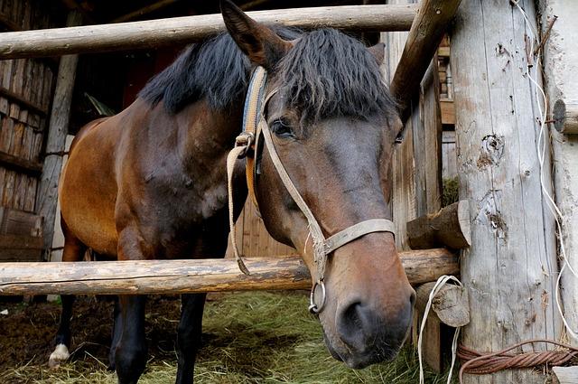 Horse, Mare, Animal, Stallion, Farm, Nature, Cicindela