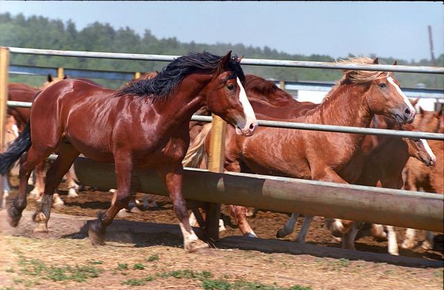 Animals, Kazan, Farm, Cicindela, Horses