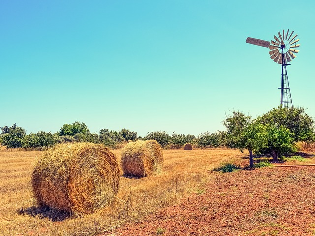 Farm, Trees, Countryside, Agriculture, Landscape, Rural