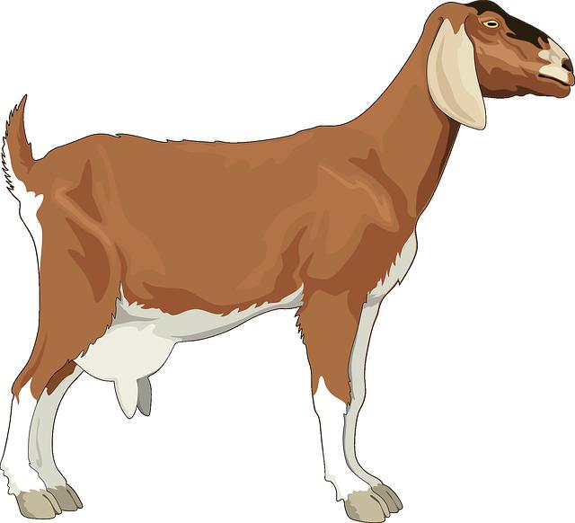 Female, Goat, Brown, Barn, Farm, Animal