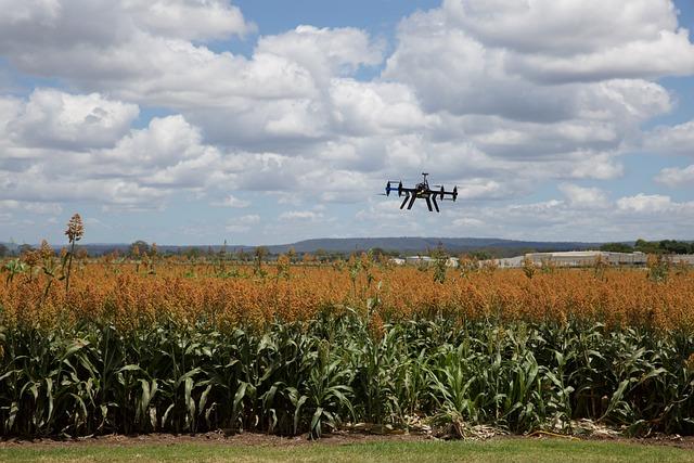 Agriculture, Landscape, Farm, Crop, Sorghum, Drone