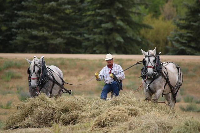 Cavalry, Mammal, Animal, Grass, Farm