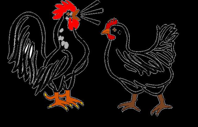 Rooster, Hen, Farm, Animals, Birds, Chicken, Poultry