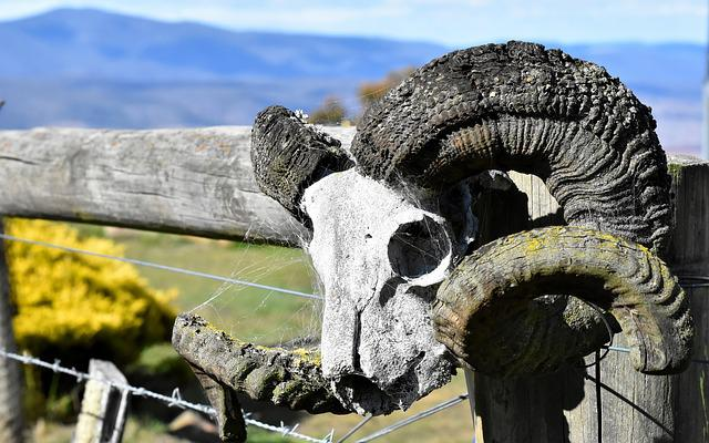 Farm, Skull, Ram, Wild, Bone, Rural, Animal, Ranch, Old