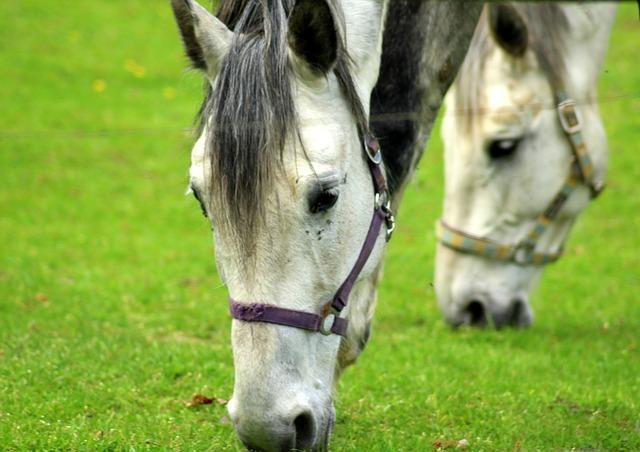 The Horse, Animals, Lawn, Farm, Grazing, Horses, Grass