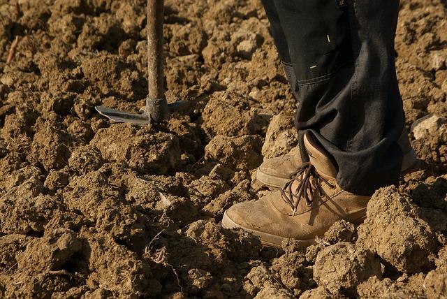 Farmer, Land Field, Tool