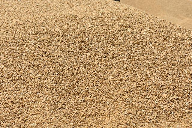 Seed, Wheat, Grain, Sand, Dry, Farmer, Summer, Sunny