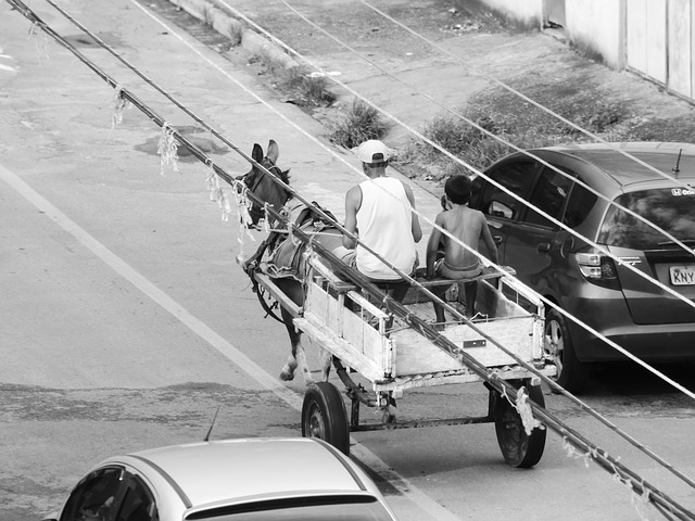 Wagon, Horse, Man, Worker, Farm, Chacara, Farmer