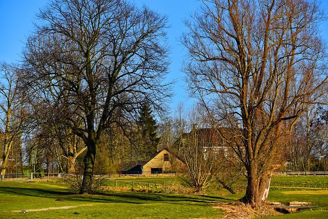 Tree, Farmhouse, Grass, Lawn, Landscape