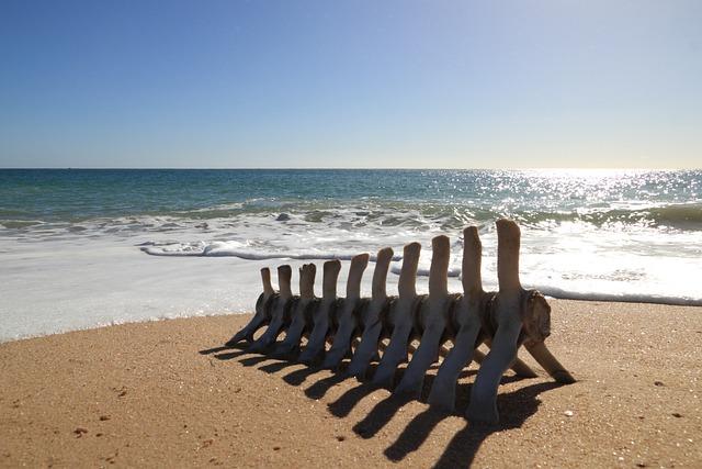 Portugal, Faro, Beach, Bone