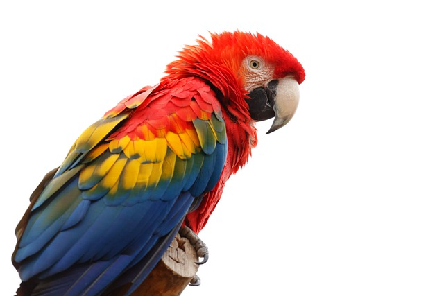 Animal, Ara, Macao, Beak, Bird, Colorful, Fauna
