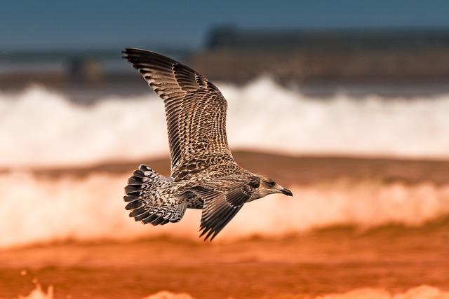 Bird, Nature, Fauna, No Person, Seagull