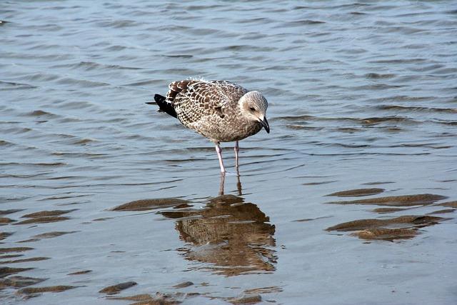 Bird, Fauna, Body Of Water, Nature, Outdoor