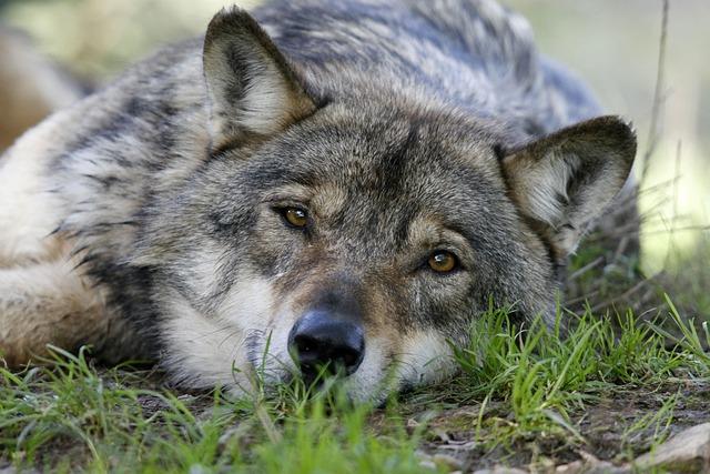 Carnivore, Fauna, Animal, Mammal