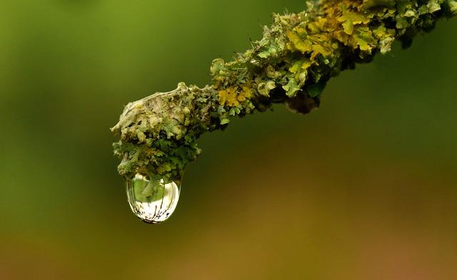 Branch, Lichen, Nature, Moss, Green, Plant, Tree, Fauna
