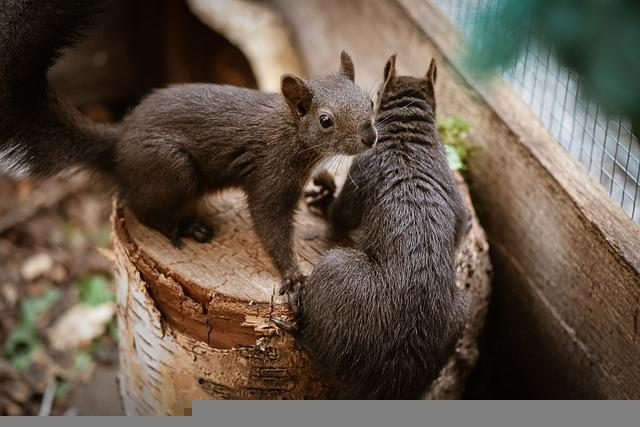 Squirrels, Rodents, Animal, Mammal, Tree, Log, Fauna