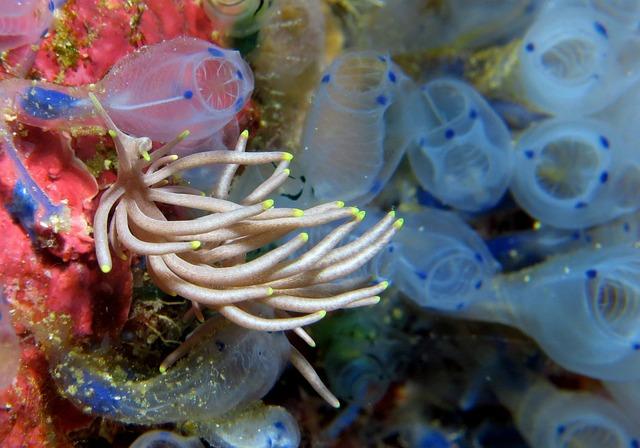 Underwater, Scuba Diving, Fauna, Marine, Nudibranch