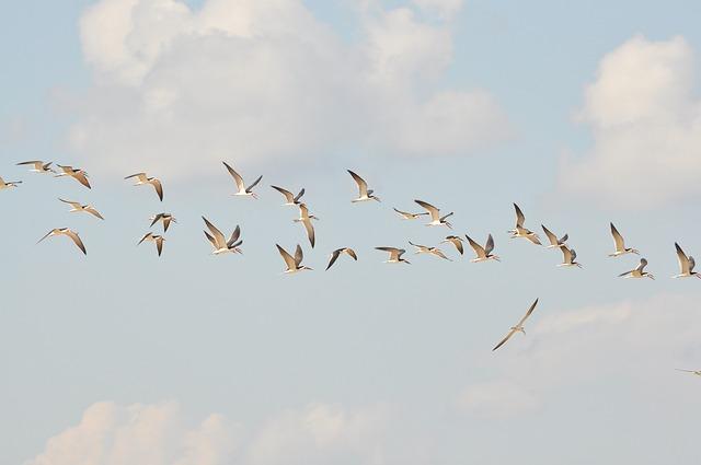 Birds, Flight, Sky, Wings, Herd, Fauta, Rio, Cáceres
