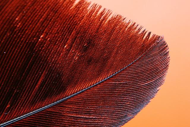 Feather, Bird, Avian, Nature, Outdoor, Wallpaper, Hd
