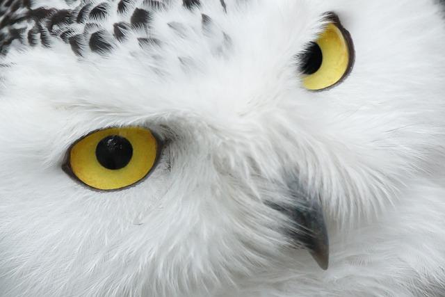Animal, Beak, Beautiful, Bird, Eye, Eyes, Feather