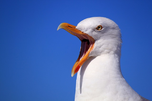 Seagull, Sky, Vacations, Bird, Bill, Feather, Animal
