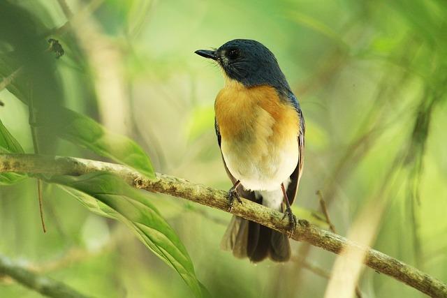 Bird, Wildlife, Nature, Animal, Outdoors, Wild, Feather