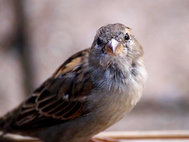Sparrow, Bird, Nature, Animal, Sperling, Feather, Young
