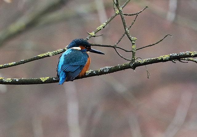 Kingfisher, Bird, Nature, Colorful, Feather, Plumage