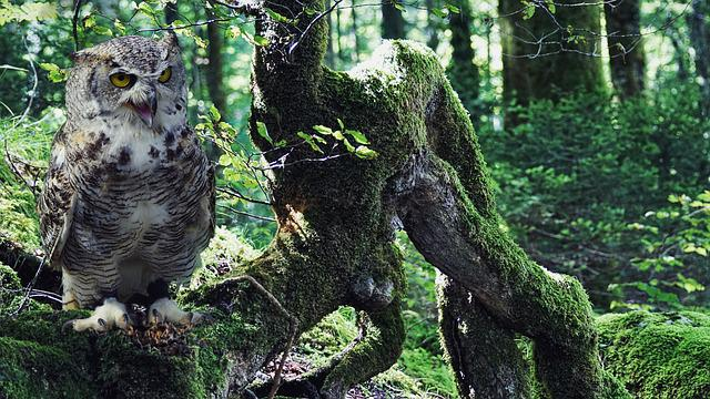 Owl, Eagle Owl, Bird, Bird Of Prey, Raptor, Feather