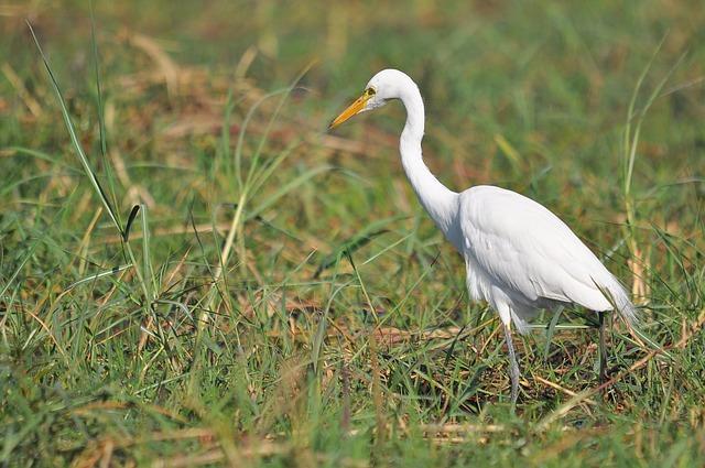Nature, Wildlife, Bird, Animal, Outdoors, Wild, Feather
