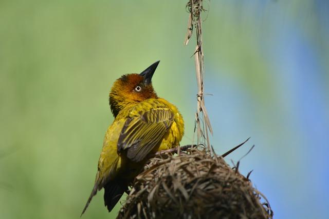 Finch, Bird Nest, Nature, Feathered
