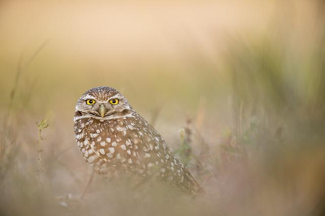 Animal, Avian, Bird, Feathers, Grass, Owl, Plumage