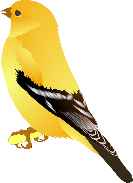 Goldfinch, Bird, Yellow, Golden, Feathers, Wings, Brown