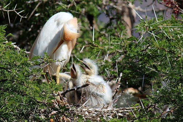 Birds, Fledglings, Nest, Nature, Feed, Dons, Beak