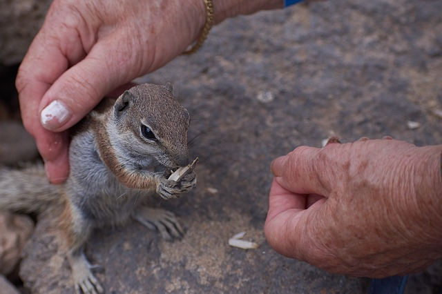 Gophers, Hand, Stroke, Feed, Nature, Animal World
