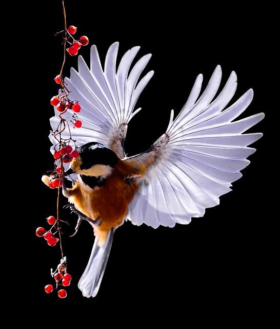 Tit, Bird, Flying, Berries, Rowanberries, Feed, Wing